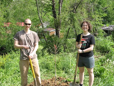 Two students finished planting one of the fruit trees.